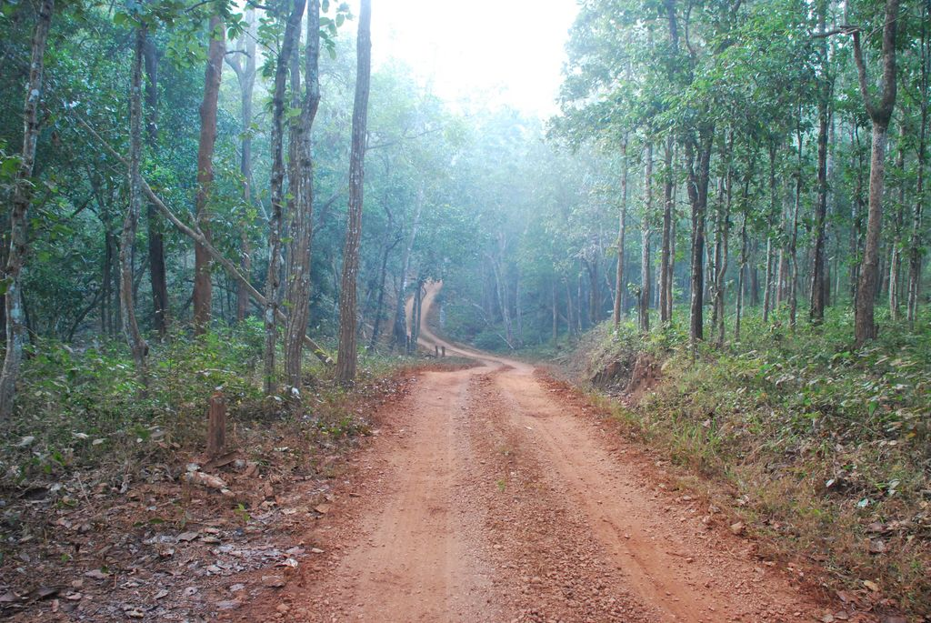 A ROAD THROUGH SIMLIPAL NATIONAL PARK