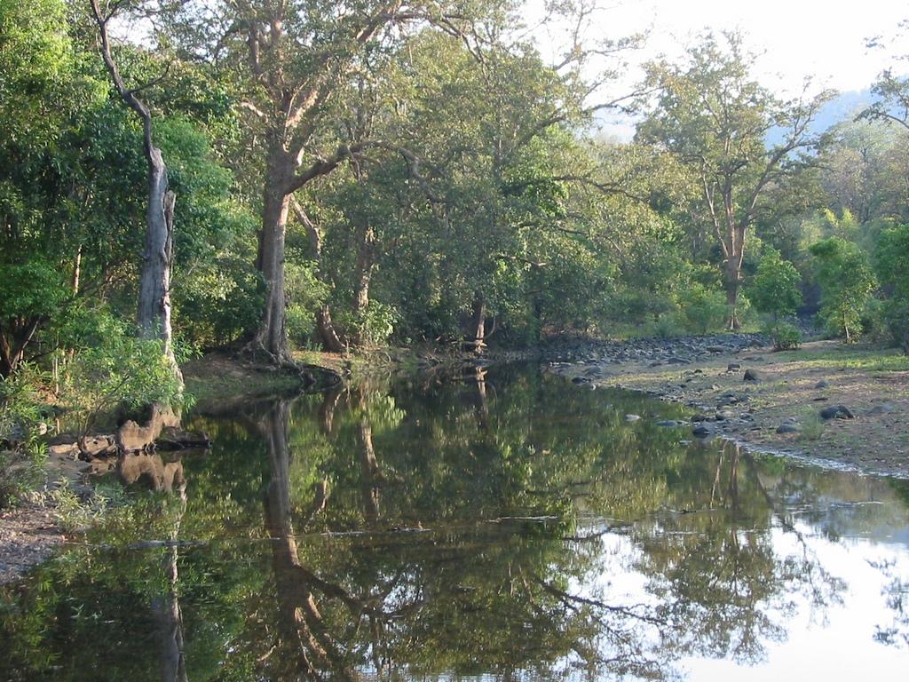 Beauty of Satpura National Park