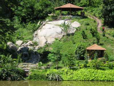 Brahmaputra Jungle Resort View