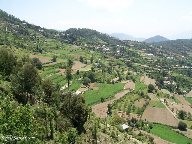 Chail Village View