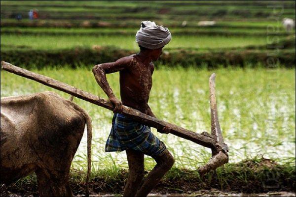 Chattisgarh farmer