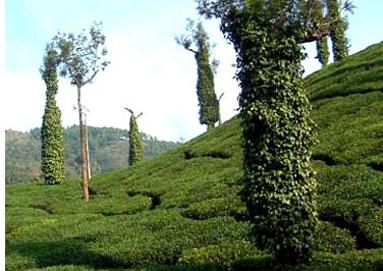 Chikmagalur beauty