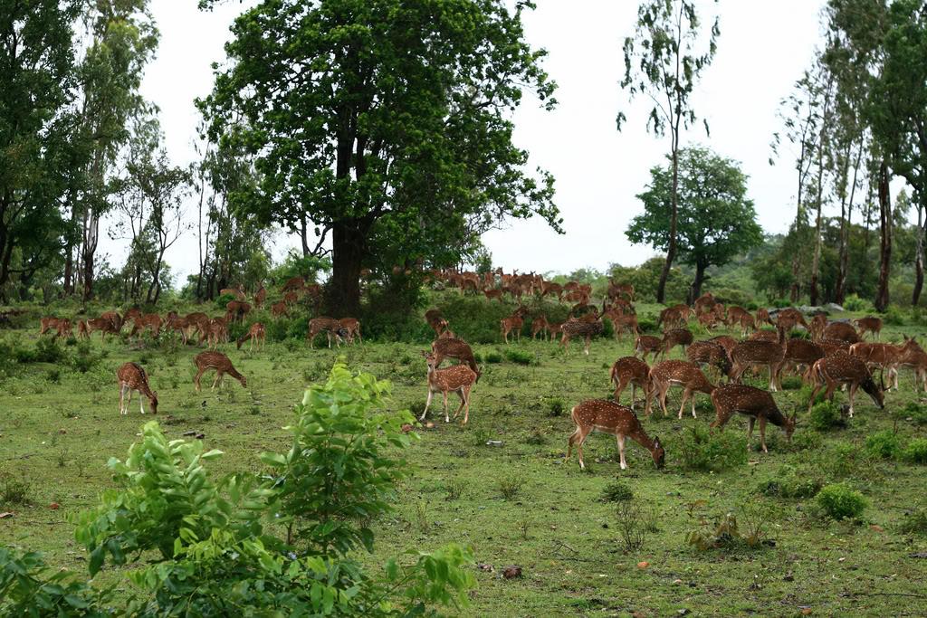 Deer in Madumalai