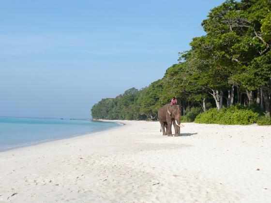 Elephant on Beach of Andaman and Nicobar Islands