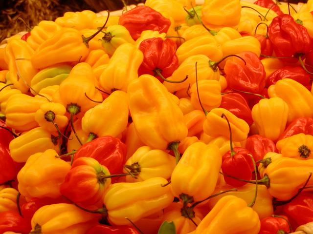 Famous Chilli of Assam