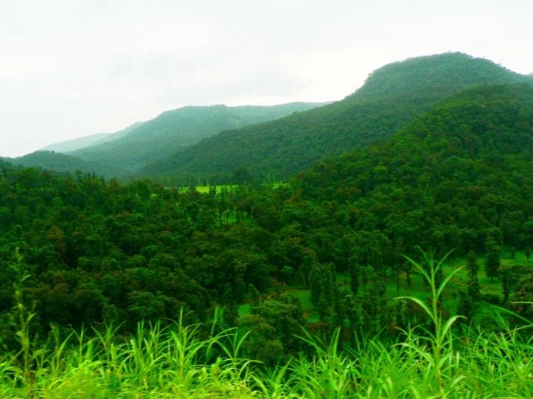 Forest - Nasik, Maharashtra