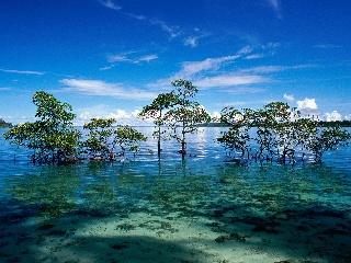 Havelock Island, Andaman and Nicobar Islands, India