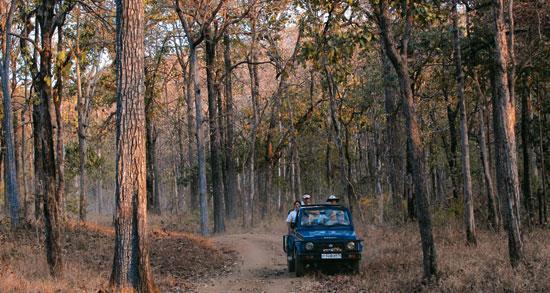 Jeep Safari in Satpura National Park