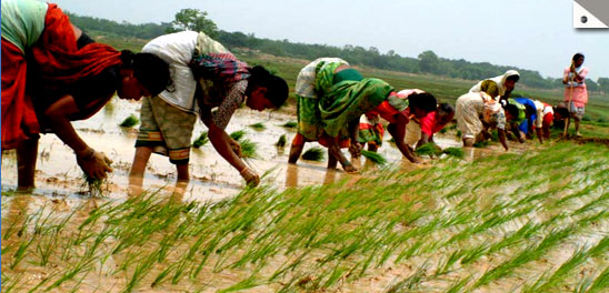 Jharkhand cultivater