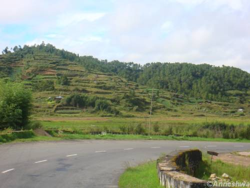Jhum cultivation over the hills