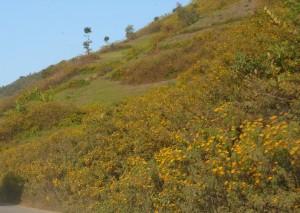 Keibul birding park, View