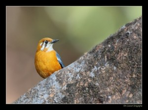 Keibul birding park, bird