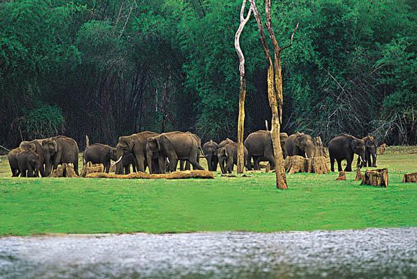 Kerala Wildlife Periyar