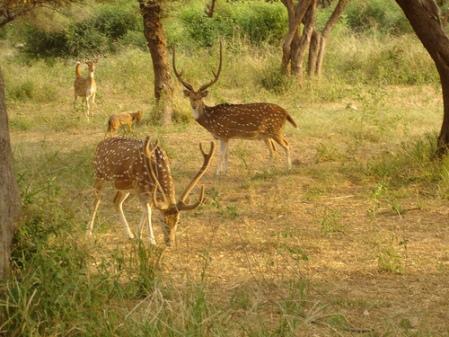 Kumbhalgar Wild life Sanctuary Udaipur