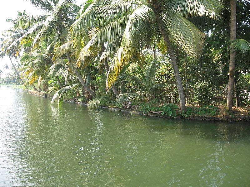 Landscape kumarakom