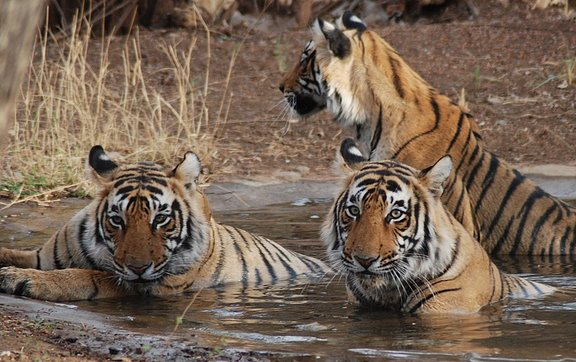 Madhya Pradesh Wildlife