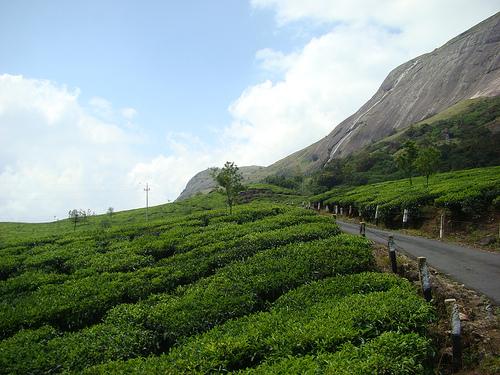 Munnar Enchanting View