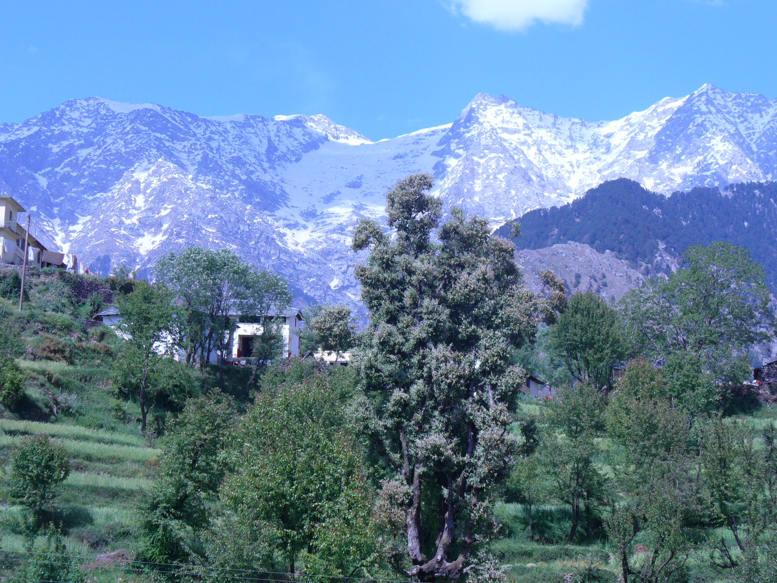 Nature Beauty in Dharamshala