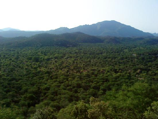 On the way to hosur