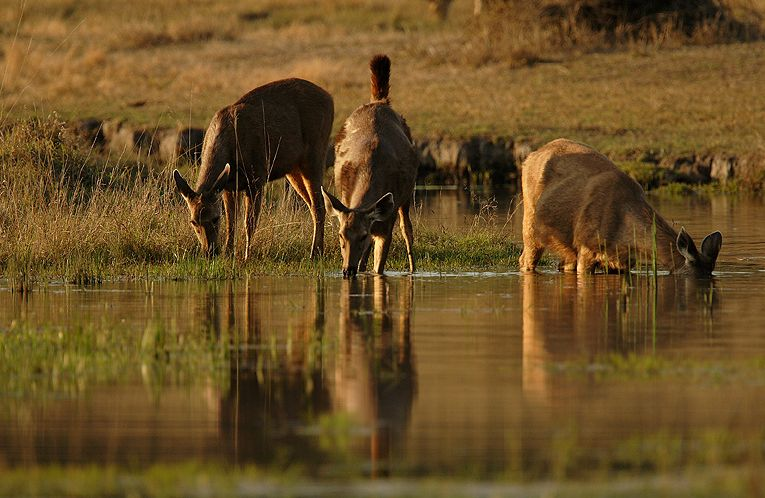 Pench national park wildlife