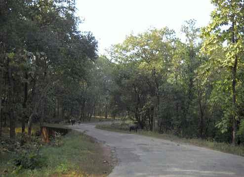 Satpura on Roads