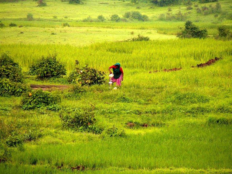 Village life - Nasik, Maharashtra