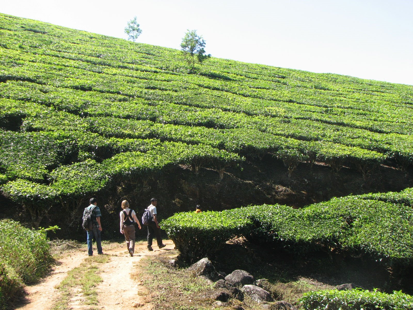 Visit Munnar Tea Garden