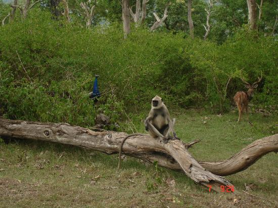 Wildlife of Madumalai