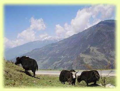 Roing mountains