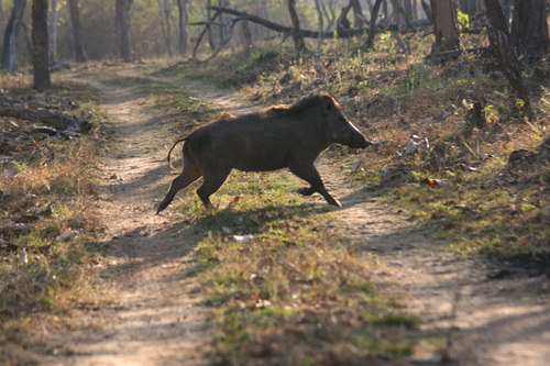 Bandipur national park wildlife sanctuary