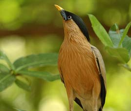 Birds in Pench