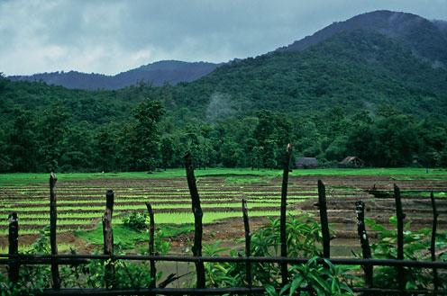 fields hills