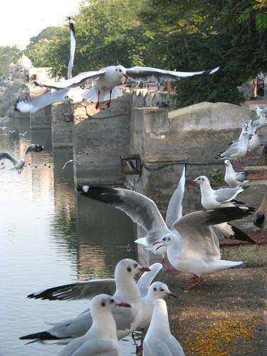 Bird watching in Jamnagar