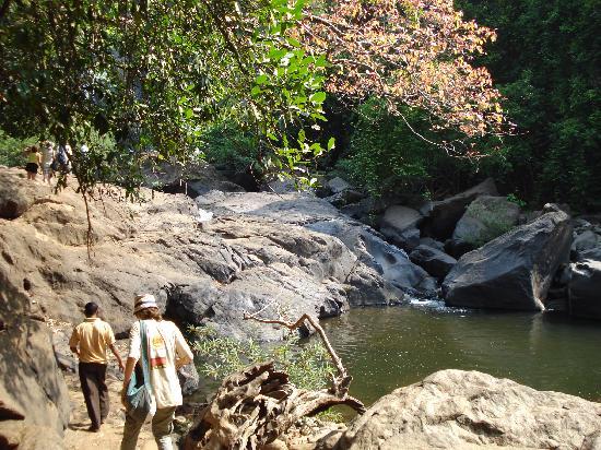 panaji Jungle Tour